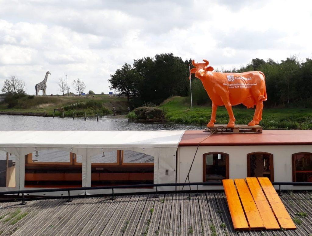 Afbeelding van plastic koe op boot